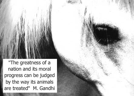 stop animal cruelty quotes. animal cruelty quotes. Face The Truth: animal cruelty