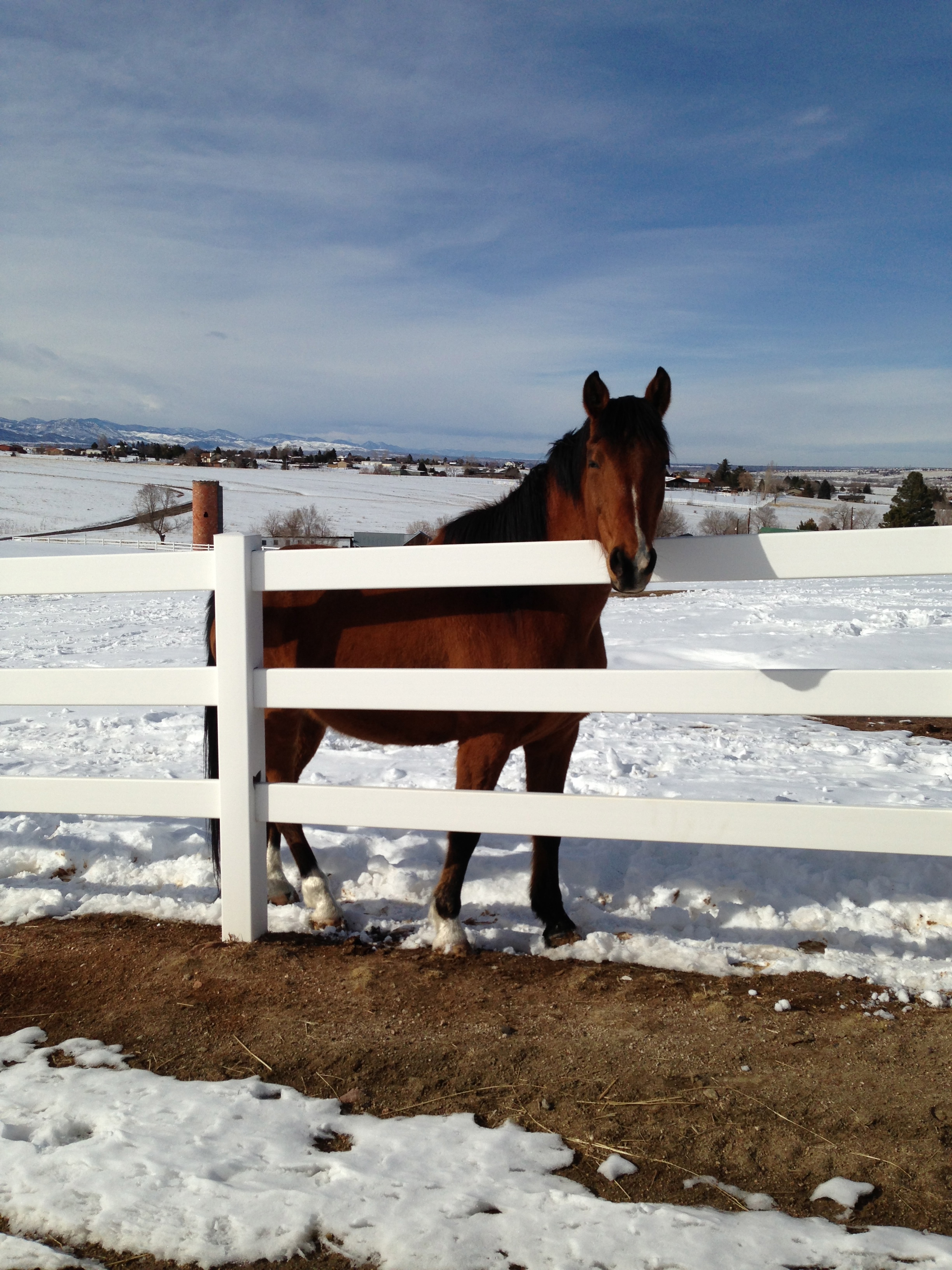 how to keep horses warm in extreme cold