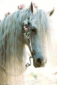 15588-Pretty-White-Horse